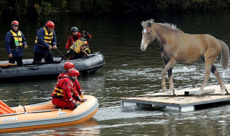 Image: Rescue workers evacuate mock animals as part of an international field exercise in Podgorica