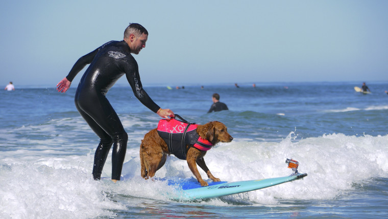 Randall Dexter and surf dog Ricochet riding the waves
