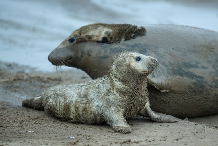 Image: BRITAIN-WILDLIFE-SEALS