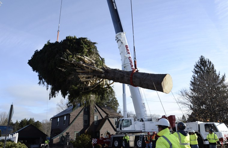Image: Rockefeller; Christmas Tree; Cutting; Oneonta; NY