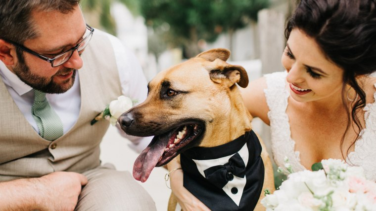Couples are including dogs and pets at weddings