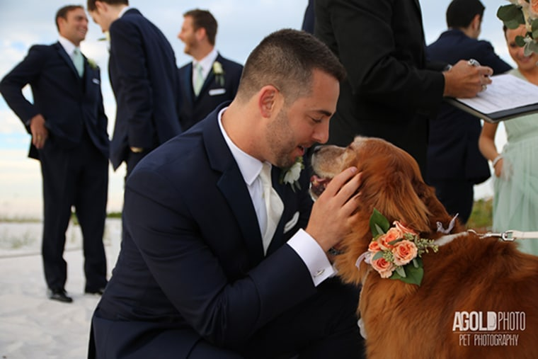 Many couples now include pets at their weddings