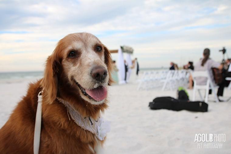 Dogs at weddings Brandy Anna and Aaron Shoopak