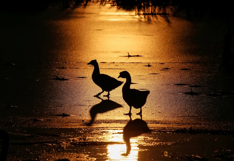 Image: Geese are seen silhouetted against the setting sun at a lake in the village of Peremoha