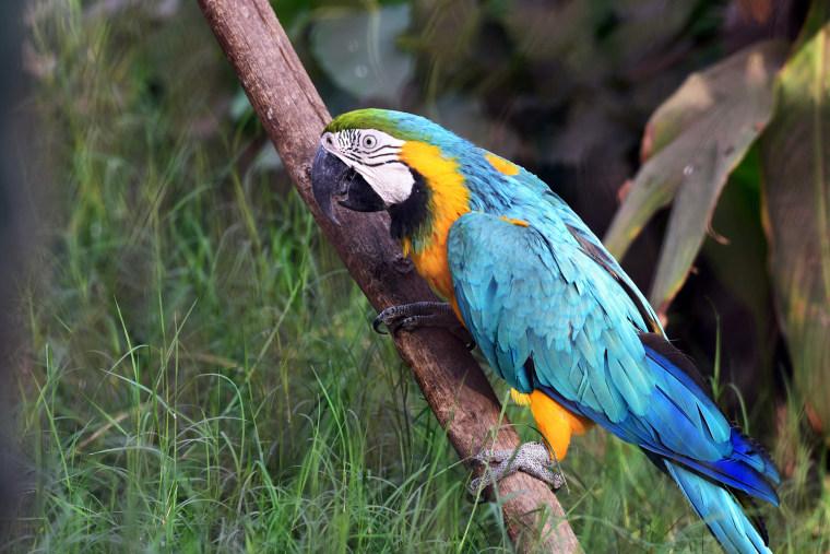 Image: EGYPT-ANIMAL-ZOO