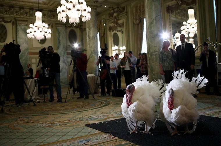 Image: ***BESTPIX*** National Thanksgiving Turkey Meets The Press Ahead Of Presidential Pardon