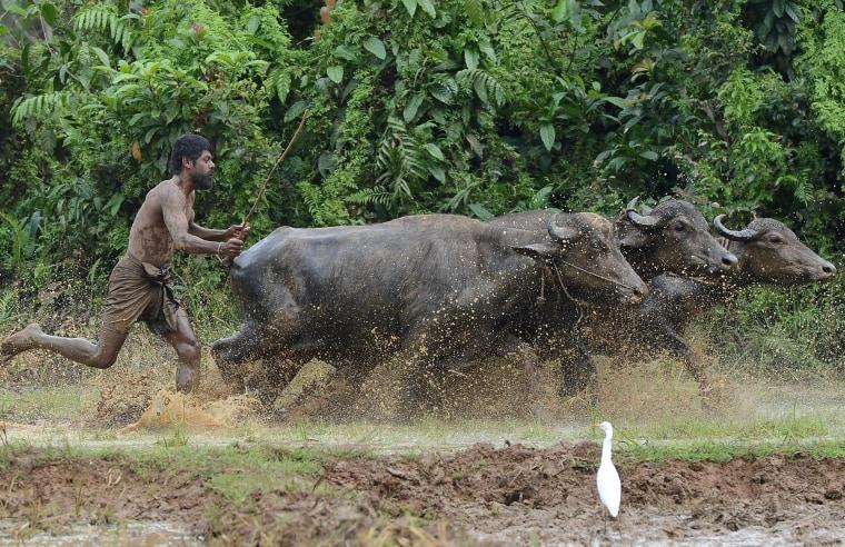 Image: SRI-LANKA-ECONOMY-AGRICULTURE
