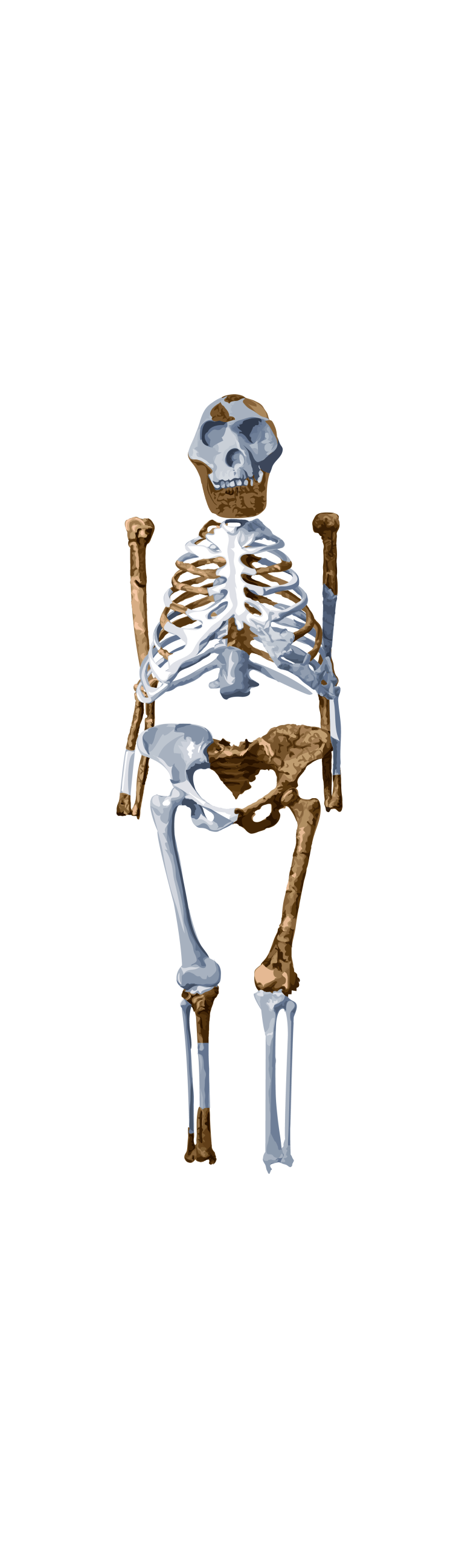 Pre-Human Lucy Climbed Trees, Scans Show