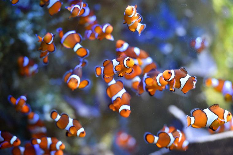 Image: FRANCE-NATURE-SEA-ANIMALS-FEATURE