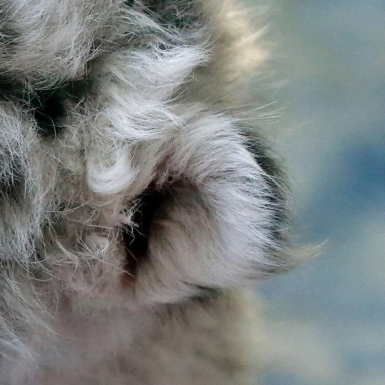 Image: CRIMEA-ANIMALS