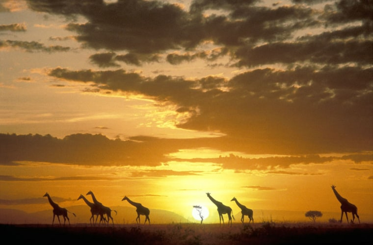 Image: Masai Mara, Kenya