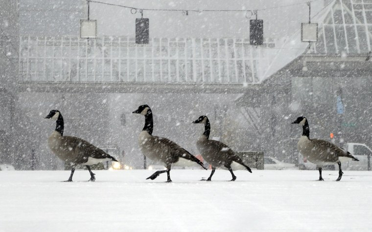 Image: Geese walk along the snow covered waterfront park through heavy snowfall as the first winter storm of the season hits the area in Portland