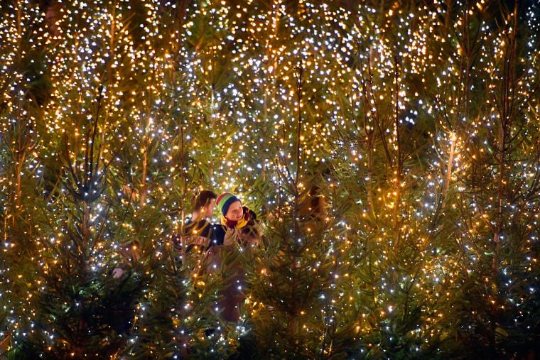 Image: Members of the public enjoy a Christmas tree maze in Edinburgh