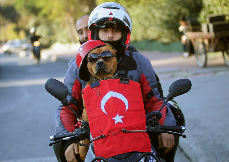 Image: A motorcyclist and his dog drive past the scene of Saturday's blasts in Istanbul, Turkey