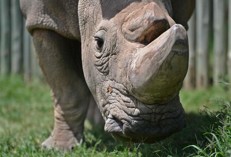 Image: YEAR2016-KENYA-AFRICA-ANIMAL-CONSERVATION