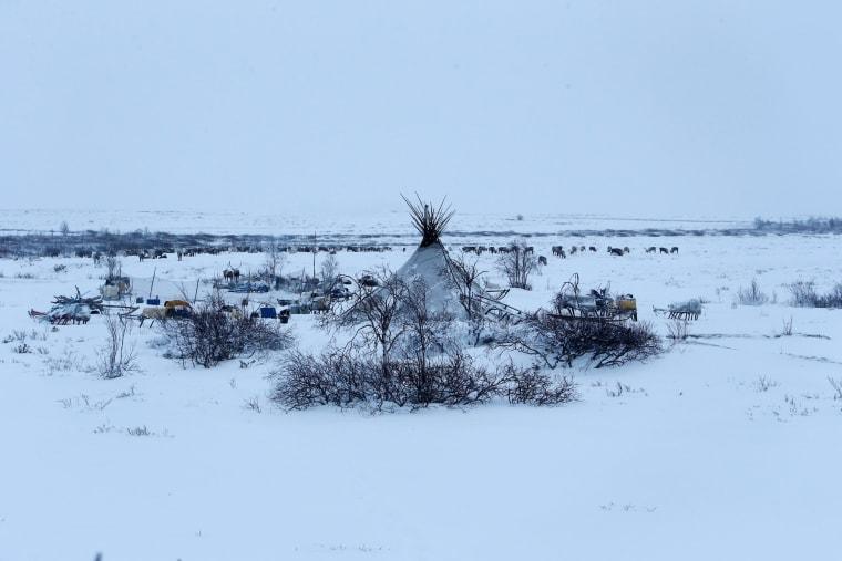 Image: The Wider Image: Reindeer herding in Russia's Arctic