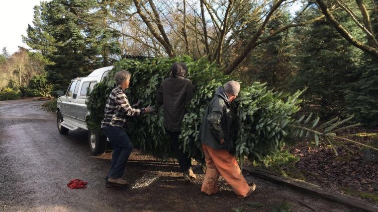 Walters Family Giant Christmas Tree