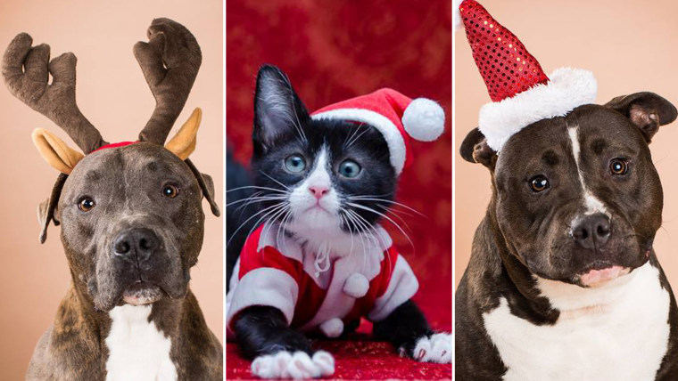 800 pets are adopted thanks to the Home for the Pawlidays promotion