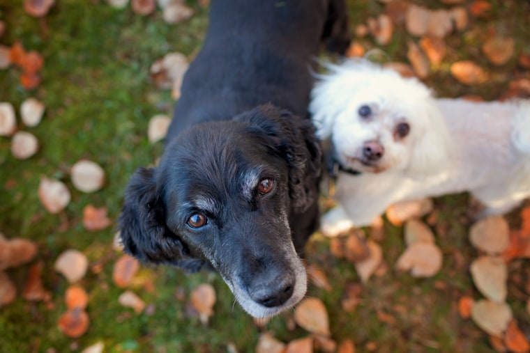 Senior dogs rescued by Old Dog Haven