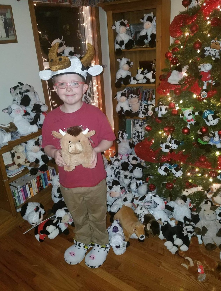 Ryan has received more than 100 stuffed cows from everywhere from California to Canada.