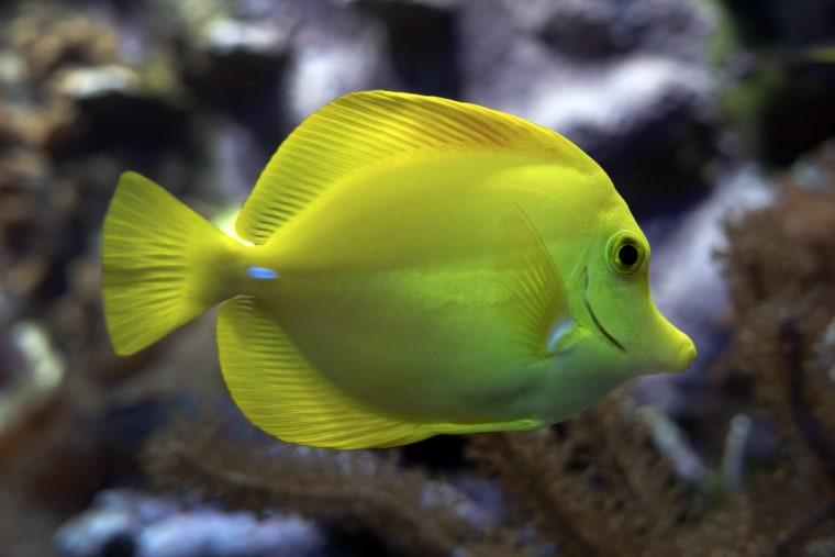 Image: Basel zoo aquarium