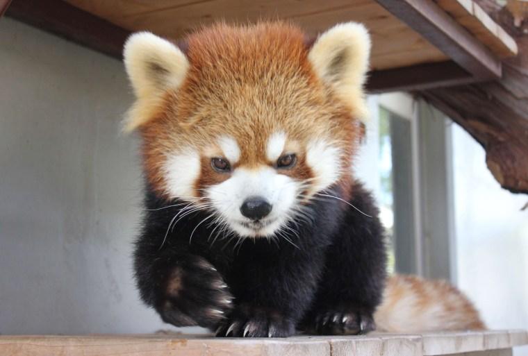 Image: JAPAN-ANIMAL-OFFBEAT