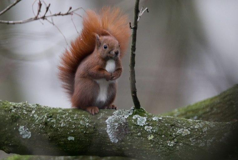 Image: GERMANY-ANIMALS-SQUIRREL