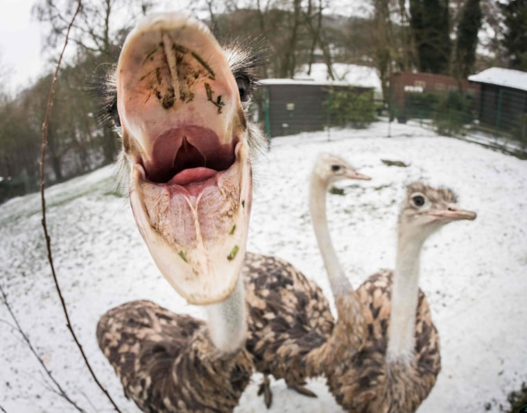 GERMANY-ANIMALS-ZOO-OSTRICH