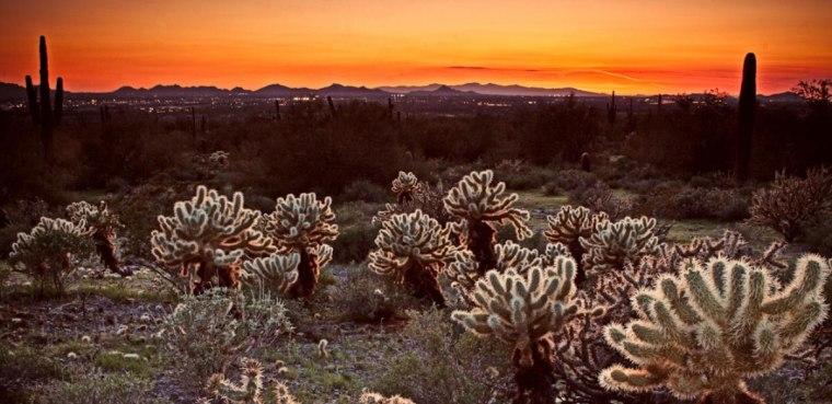 Image: McDowell Sonoran Preserve