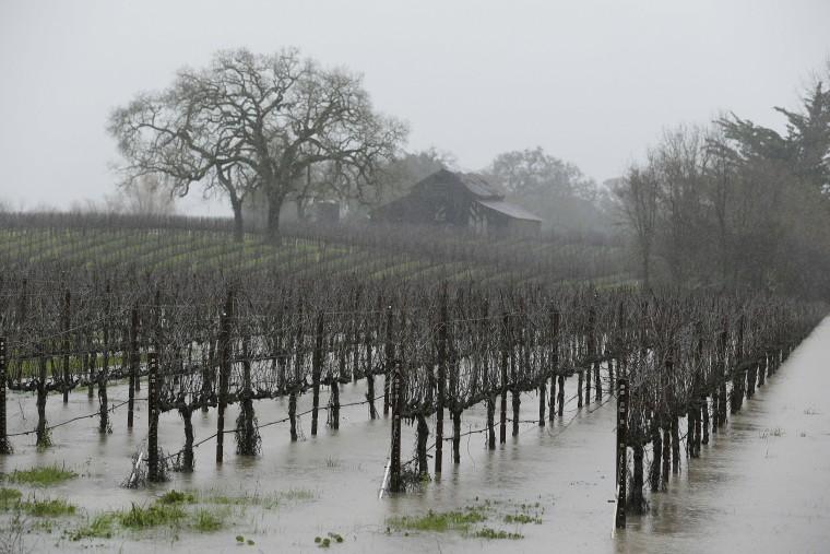 Image: Flooded vineyard