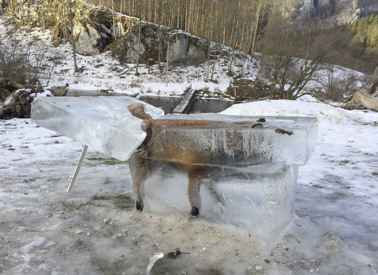 Image: Fox in a block of ice