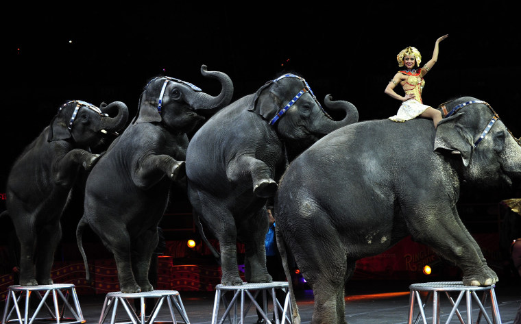 Image: Ringling Bros. and Barnum & Bailey circus elephants perform
