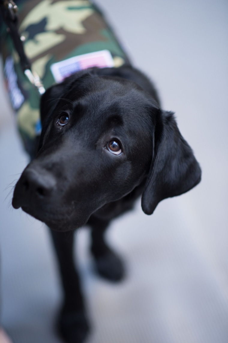 Charlie, TODAY Show puppy with a purpose veterans