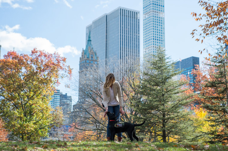 TODAY's puppy with a purpose, Charlie, practices his guide dog training skills in Central Park