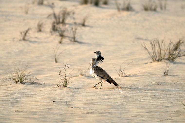 Image: UAE-ANIMAL
