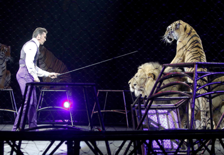 Image: Big-cat trainer Alexander Lacey performs with lions and tigers in Providence, Rhode Island during the last show for the Asian elephant, May 1, 2016.
