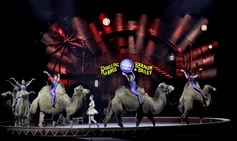 Image: Performers ride camels during a performance, Jan. 14, 2017, in Orlando, Florida.