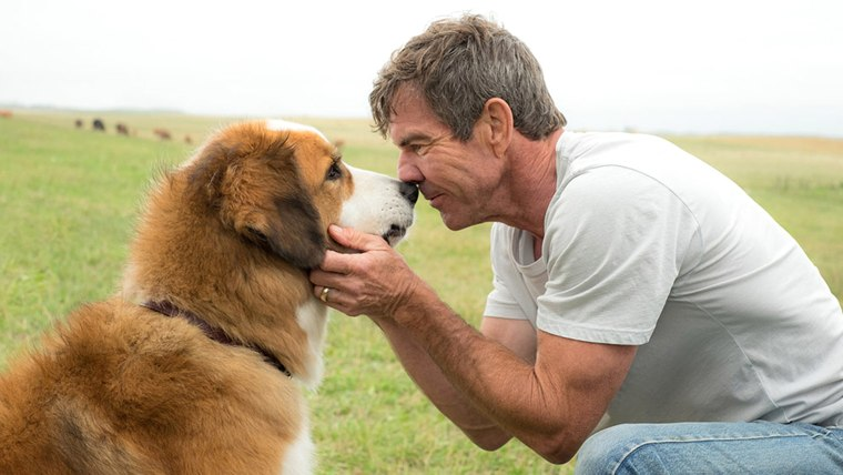 A dog's Purpose - Dennis Quaid