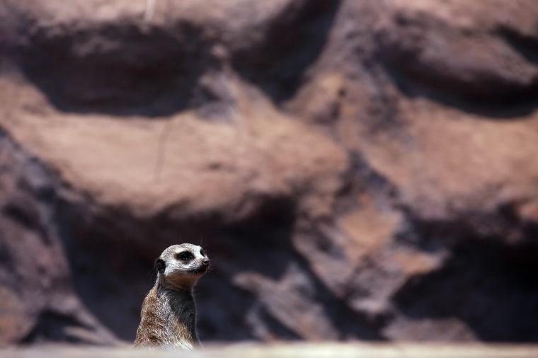 Metropolitan Park Zoo in Santiago de Chile