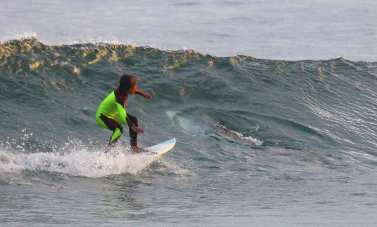 Image: A boy surfs near what is believed to be a great white shark