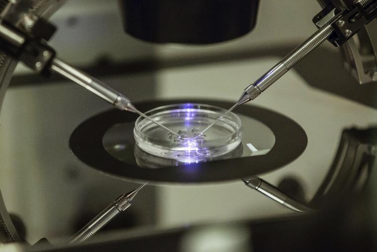Image: embryologist