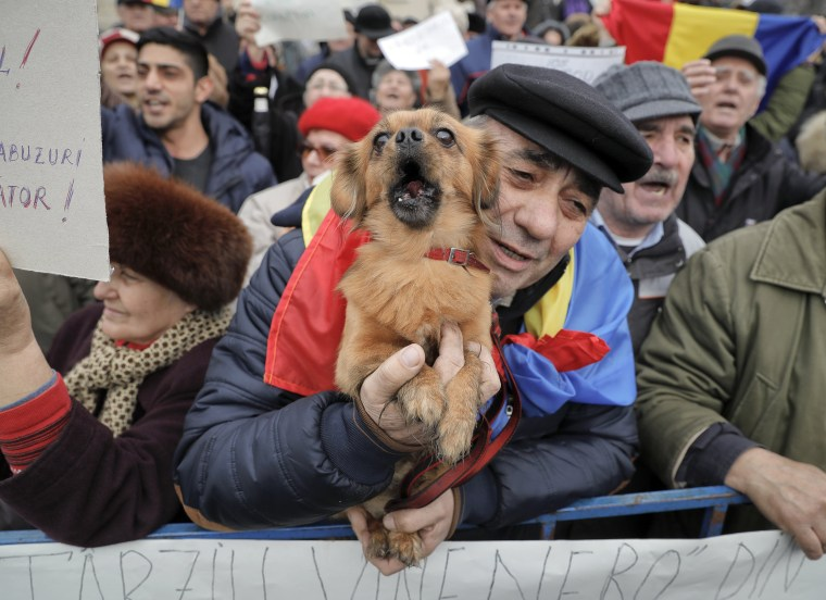 Image: A man holds a small dog as others shout slogans against Romanian President Klaus Iohannis, during a pro-government demonstration.