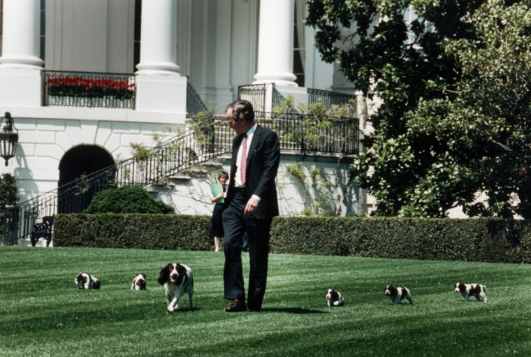 Image: President George Bush walks across the White House lawn with his springer spaniel, Millie and her puppies. April 20, 1989