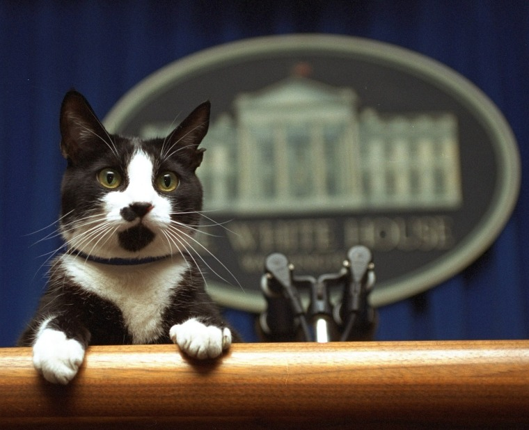 Image: White House cat, Socks, peers over the podium in the briefing room