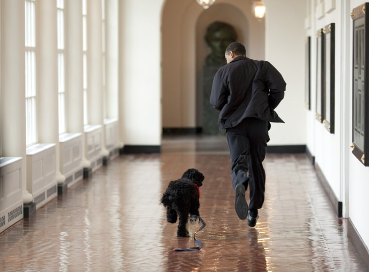 Image: Obama's Welcome New Dog