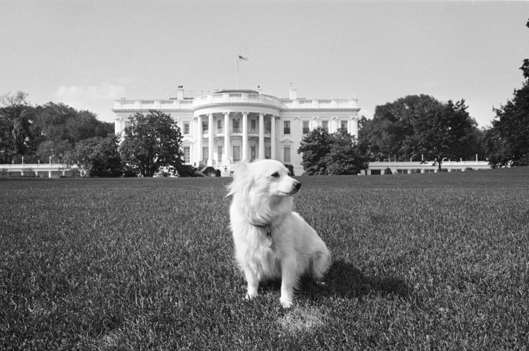 Image: Pushinka, a gift to Presdient John F. Kennedy from Soviet Premier Nikita Khrushchev, stands her ground on the White House lawn