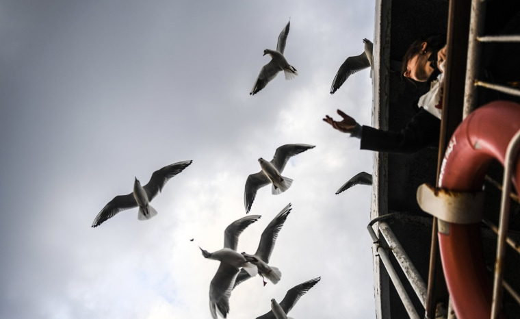 Image: A woman feeds seagulls as she travel on a ferry from the European to the Anatolian side of Istanbul