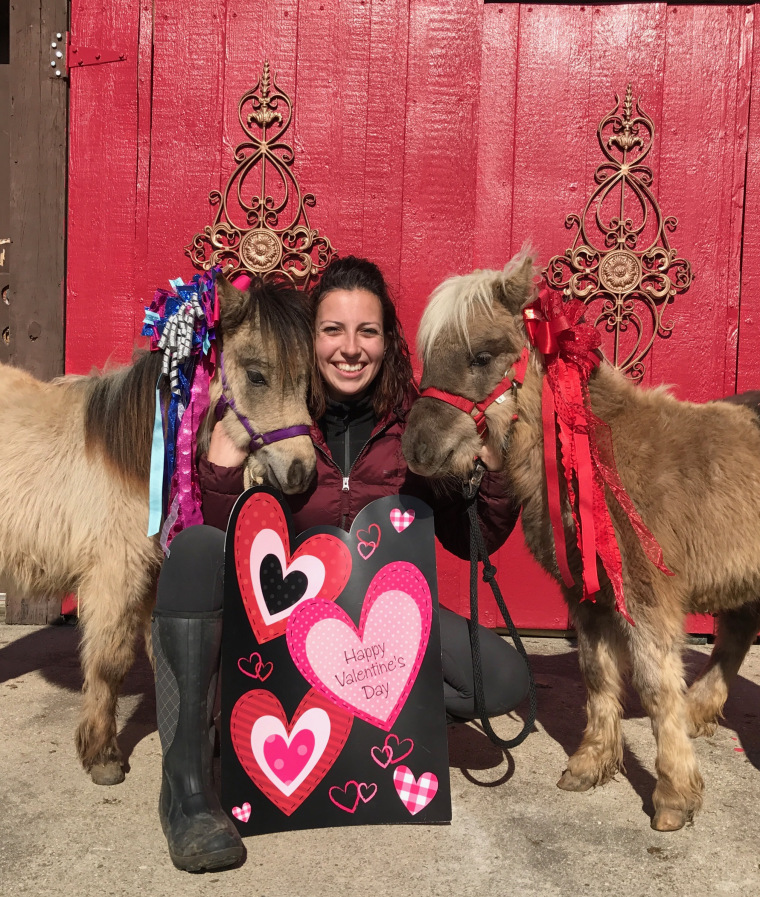 Miniature therapy horses in their special Valentine's Day outfits.