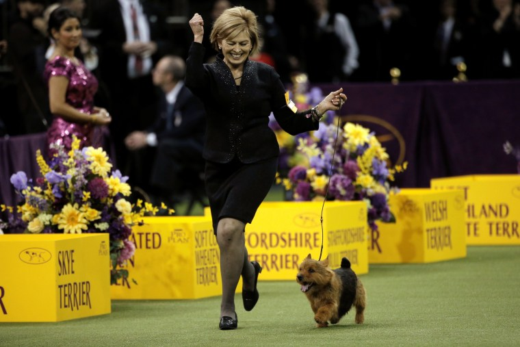 Image: Handler Suzie Kipp celebrates as she runs Tanner, a Norwich Terrier and winner of the Terrier Group, at the 141st Westminster Kennel Club Dog Show at Madison Square Garden in New York City