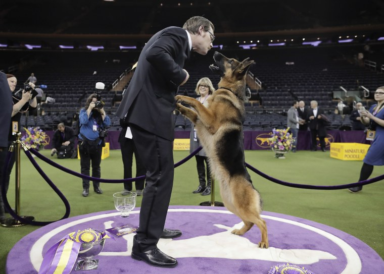 Image: Rumor, a German shepherd, leaps to lick her handler and co-owner Kent Boyles on the face after winning Best in Show